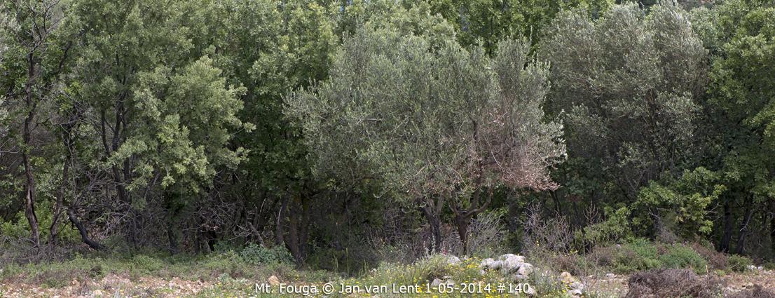 Mt. Fouga © Jan van Lent 1-05-2014 #140.