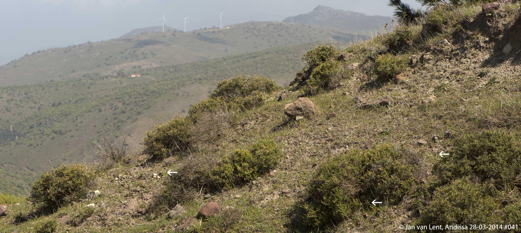 Habitat Andissa © Jan van Lent 28-03-2014 #041.